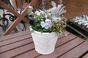 春の寄せ植え ファイバーグラス(白)