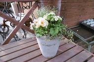 春の寄せ植え ファイバーグラス(グレー)