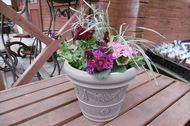 春の寄せ植え レッド系